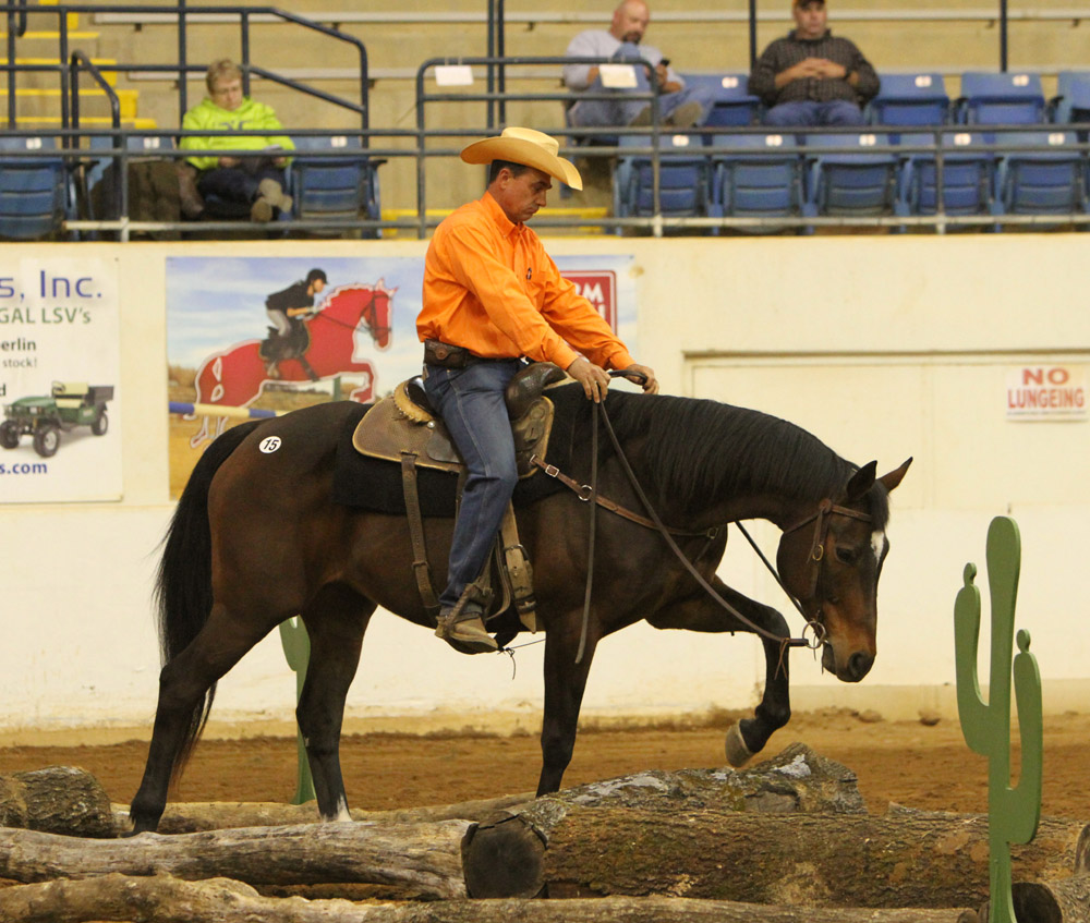 great american ranch and trail horse sale  u2013 with horse